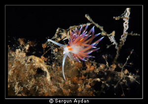 My Nudi by Sergun Aydan 